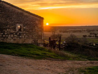 Landscape with a black horse on a farm in the meadow in Spain during sunset