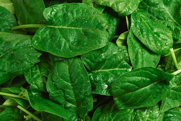 Fresh spinach leaves as background.