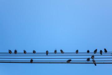 Doves sitting on power cable. Tauben sitzen auf Stromkabel.