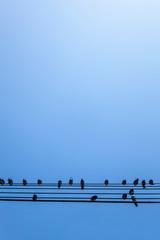 Tauben sitzen auf Stromkabel. Doves sitting on cable.