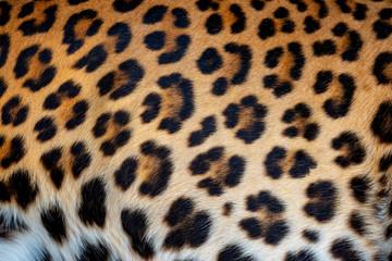 Fototapete - Leopard skin texture for background