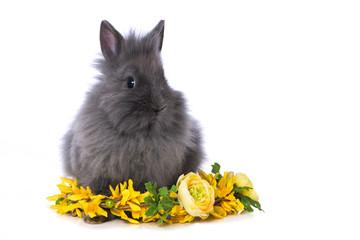 Cute dwarf rabbit with flower wreath