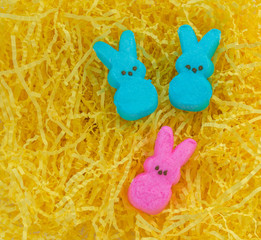 three marshmallow Easter bunnies nestled on yellow Easter grass with copy space