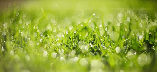 Abstract Blurred grass background