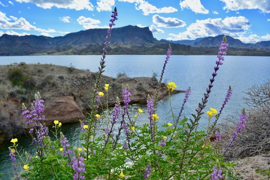 Cattail Cove State Park Arizona Lake Havasu City Colorado River Desert Water