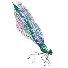 Exotic dragonfly wild insect in a watercolor style isolated. Aquarelle wild insect for background.