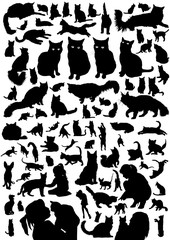 Cat black silhouette set. Vector domestic illustration