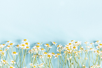 Flowers composition. Chamomile flowers on pastel blue background. Spring, summer concept. Flat lay,...