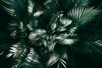 Vertical garden with tropical green leaf, Dark tone