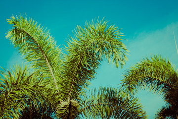 Palm tree branches under blue sky. Tropical vibes concept. Retro style poster.