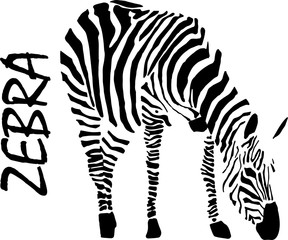 Zebra, hand drawing, vector