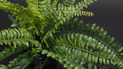 Artificial  fern plants or plastic or fake tree on black background.