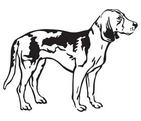 Decorative portrait of Dog Estonian Hound vector illustration