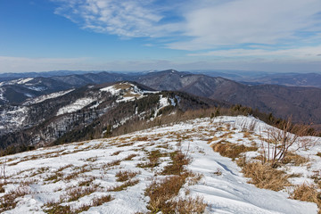 View of the Carpathian natural beech forest in the early spring from the top