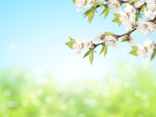 Fototapete - Abstract sunny blur spring background with flowers of cherry