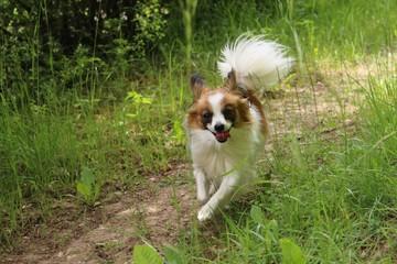 dog puppy on grass running towards the camera