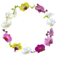 Flowers. Floral background. Orchids. Tropical flowers. Wreath.