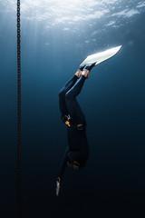 Wall Mural - Freediver in monofin descends into depth along the anchor chain in the sea