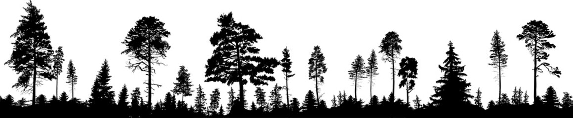 panorama of high black trees forest on white