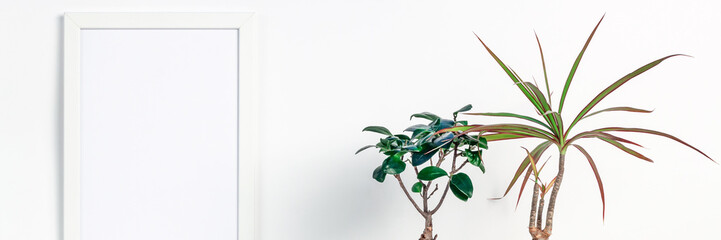 Decoration with bonsai and palm trees. White empty wall with a mockup frame. Copy space. Space for text or graphics. Panoramic real photo