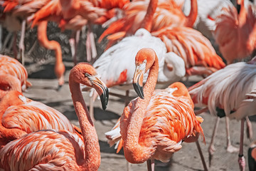 A flock of flamingos close up close in nature.