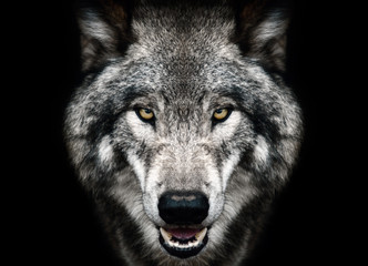 Wolf face black and white