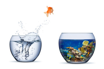Fototapeta goldfish jump out of bowl into coral reef paradise fish change chance freedom concept isolated background obraz
