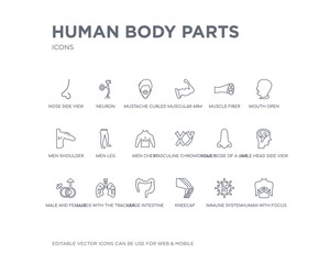 simple set of human body parts vector line icons. contains such icons as human with focus on the lungs, immune system, kneecap, large intestine, lungs with the trachea, male and female gender, male