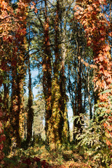 Beautiful autumn forest in the sunny morning.