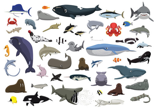 Various Cute Sea Animals Cartoon Vector Illustration