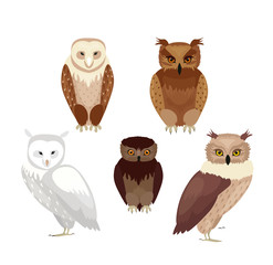 Vector illustration of realistic owls set. Collection of owls in realistic style, vector collection isolated on white background.