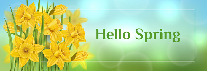Obraz Horizontal spring banner with yellow daffodil flower and green leaf in grass. Vector illustration for spring and Easter, nature desgin template with border - fototapety do salonu