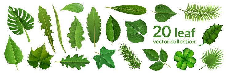 Fototapeta Green leaf collection including 20 type of different leaf design, tropical, flower and fruit leaves. Vector illustration, isolated on white, for nature, eco and summer design obraz