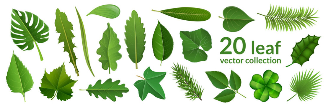Green leaf collection including 20 type of different leaf design, tropical, flower and fruit leaves. Vector illustration, isolated on white, for nature, eco and summer design