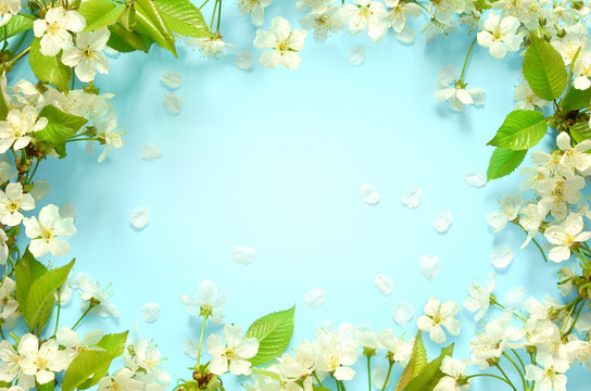 Beautiful spring nature background with lovely blossom, petal a on turquoise blue background , top view, frame. Springtime concept.