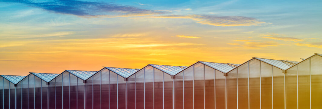 Large Industrial Greenhouse at Sunset. Gorgeous Sunset Red and Orange Sky Over the Building of Greenhouses Plant. Panoramic View of the Greenhouse at Sunset