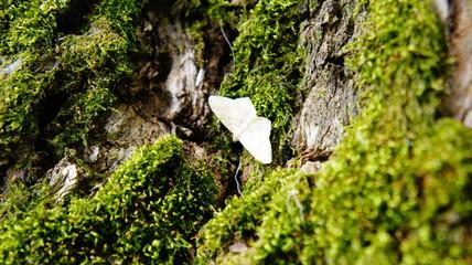 moth on moss