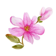 Watercolor magnolia branch with leaves and pink flower isolated on white background. Hand drawn watercolor illustration. Image of blooming magnolia branch. Pink flower for design, print or fabric.