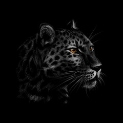 Portrait of a leopard head on a black background.