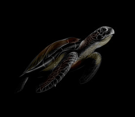 Portrait of a big sea turtle on a black background