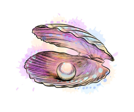 Opened shell with pearl inside from a splash of watercolor