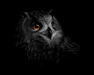 Foto op Plexiglas Uilen cartoon Portrait of a long-eared owl on a black background