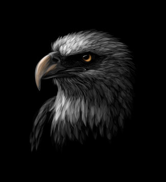 Portrait of a head of a bald eagle on a black background