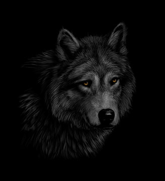 Portrait of a wolf head on a black background