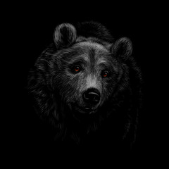 Fototapete - Portrait of a brown bear head on a black background.