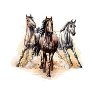 Three horses run gallop from a splash of watercolor, hand drawn sketch