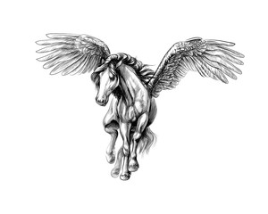 Pegasus mythical winged horse. Hand drawn sketch