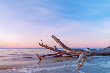 log lying on the shore / dawn on the shore early spring blue shades Wall mural