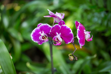 Closeup orchids wallpaper background print