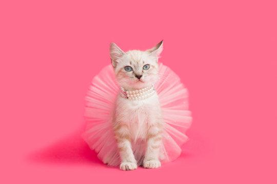 Fancy white kitten playing dress-up princess, pink background.